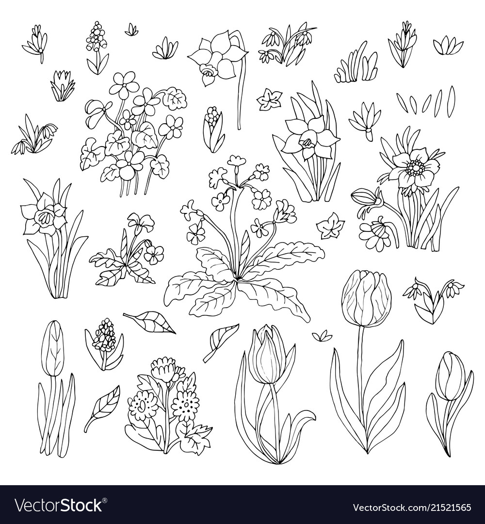 Flowers collection set design for greeting card