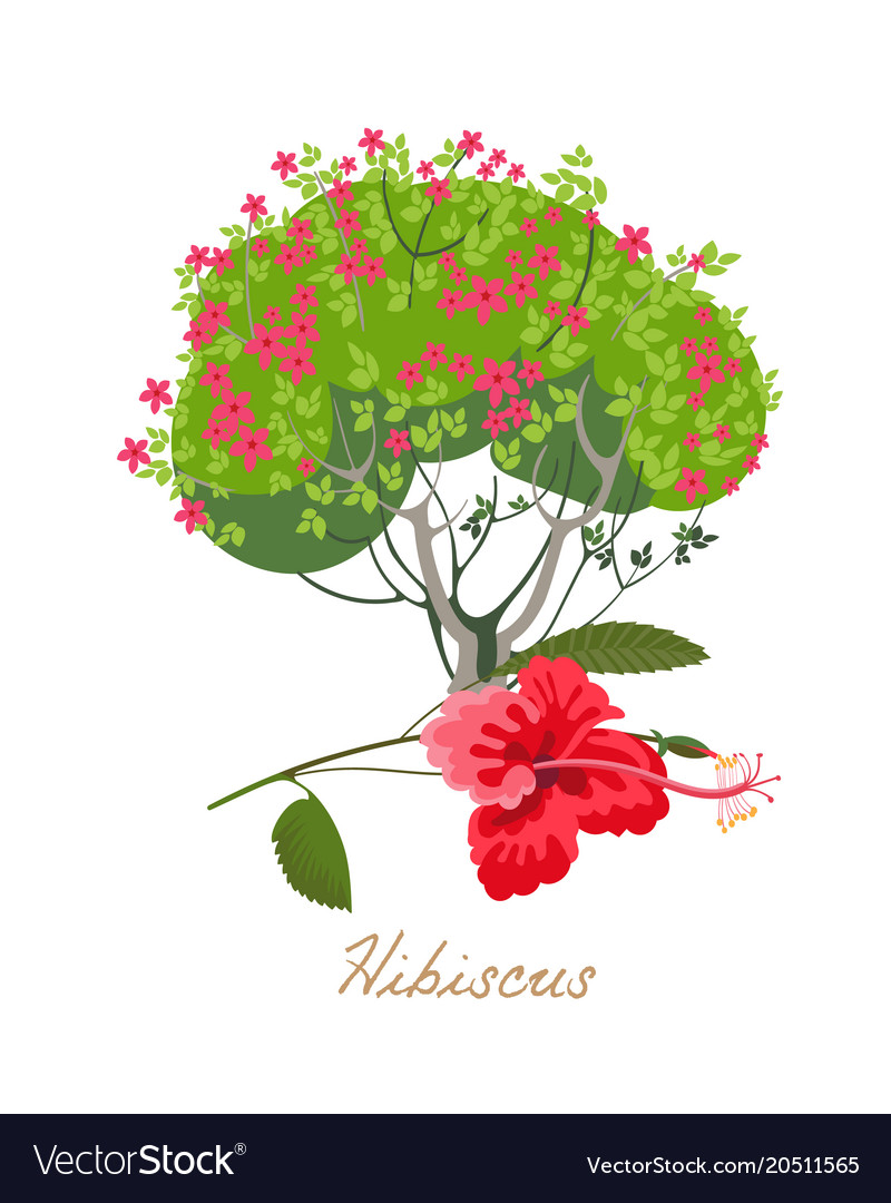 Tropical flowers and plants hibiscus vector image