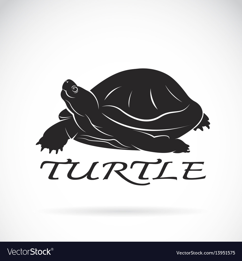 A turtle on white background reptile animal