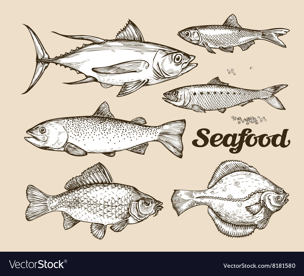 Seafood Hand drawn sketch of