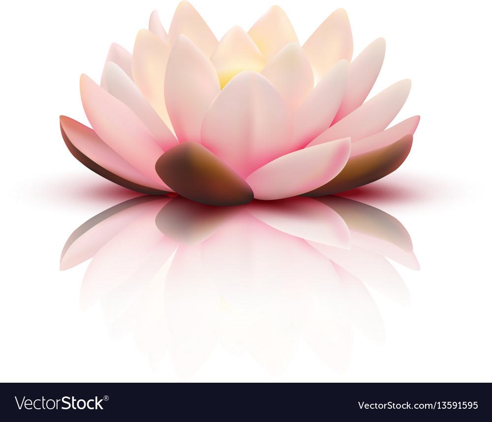 3d flower of lotus
