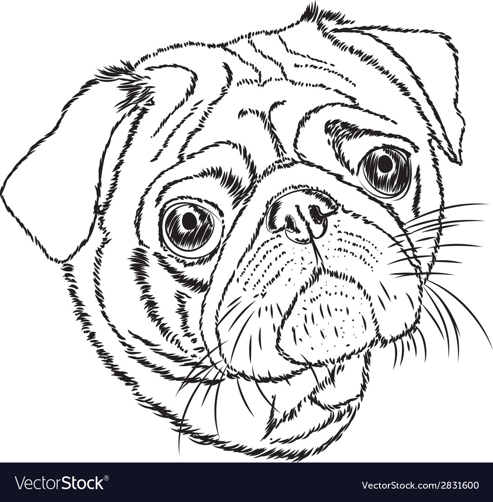 Pug linear on a white background