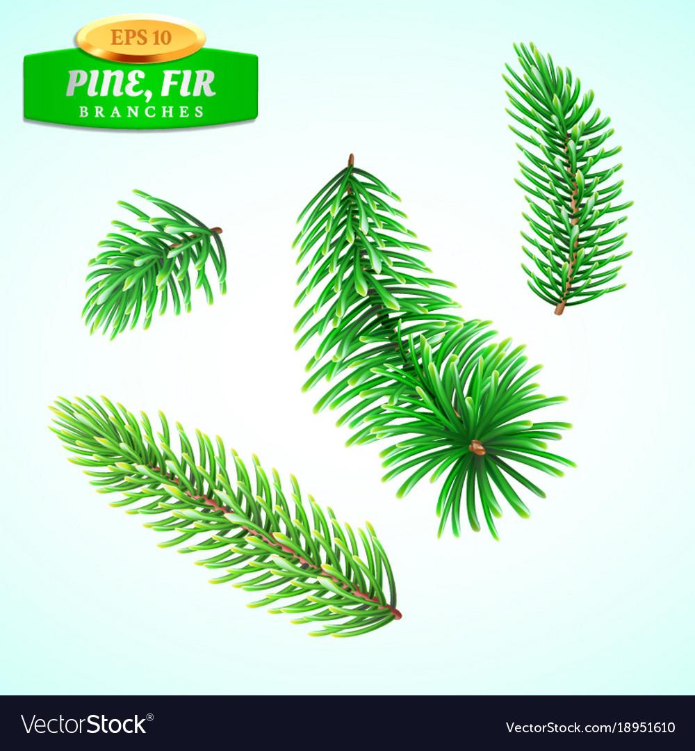 Set of fir branches christmas tree pine tree