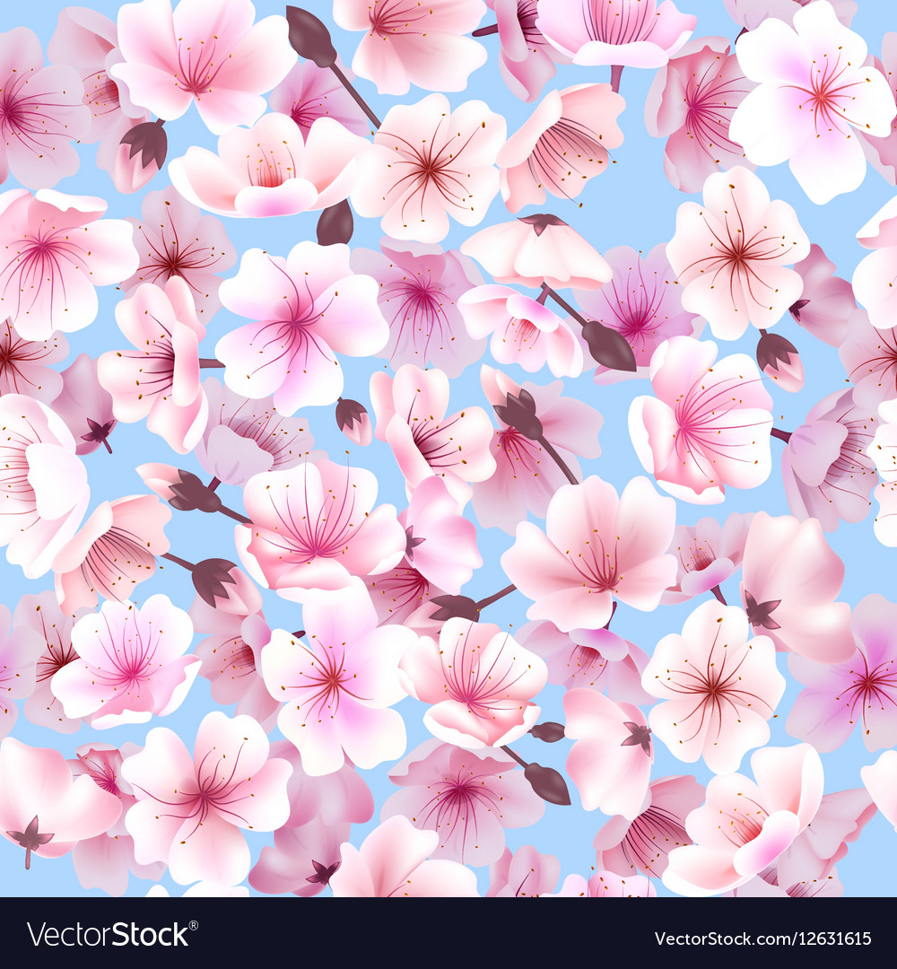 Seamless pattern with cherry blossom Blossoming