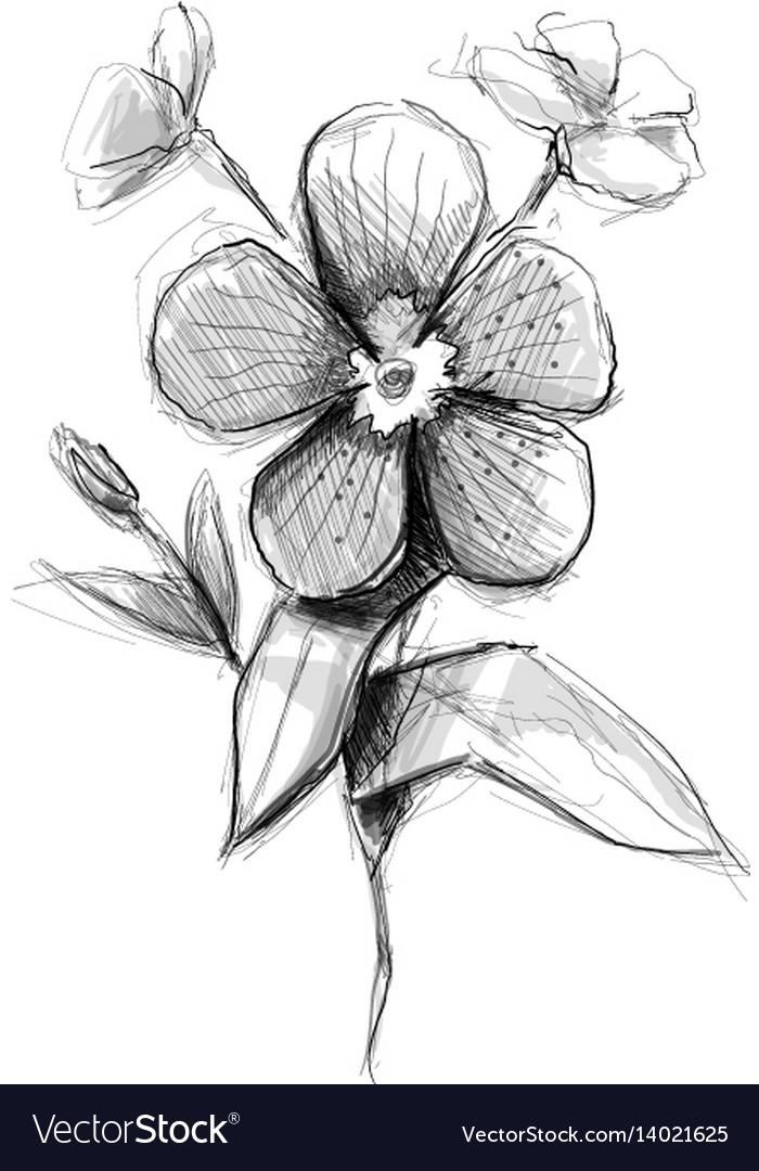 Flower Artistic Sketch Royalty Free Vector Image