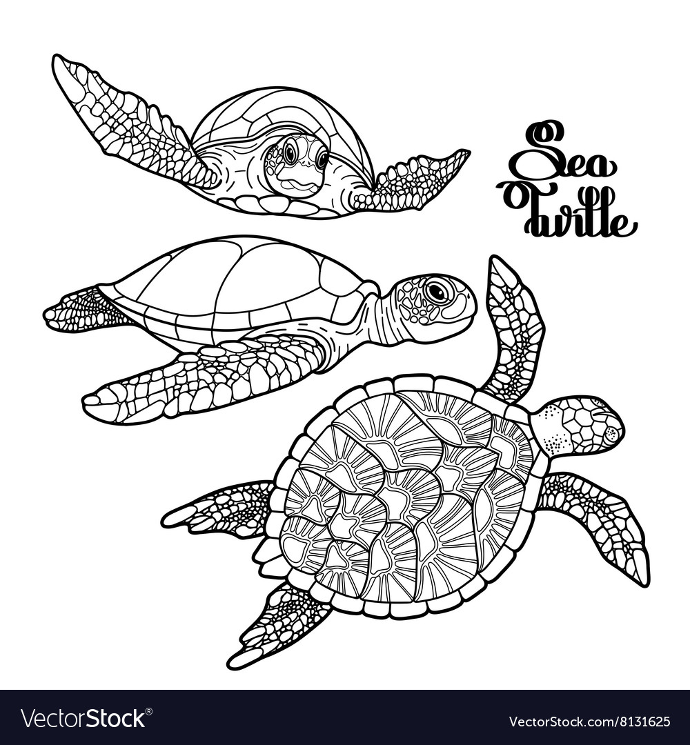 Hawksbill sea turtle collection