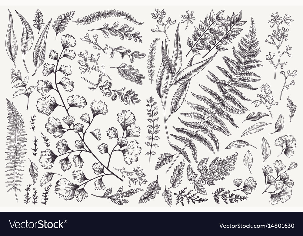 Set with leaves and ferns