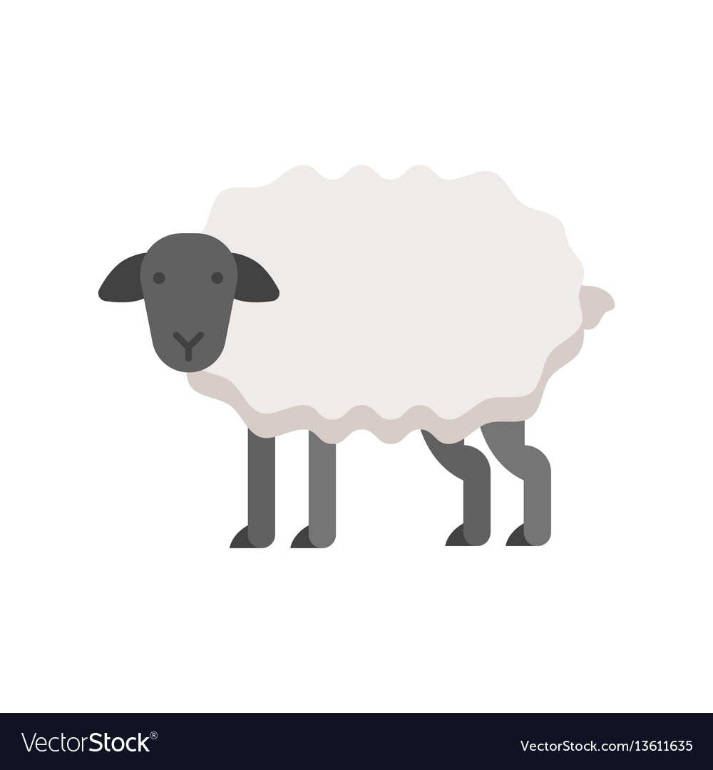 Flat style of sheep