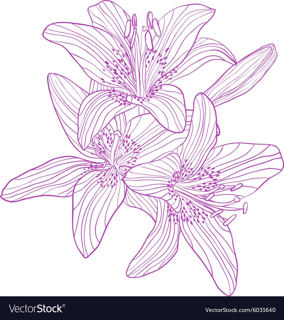 Graphic drawing bouquet of lilies
