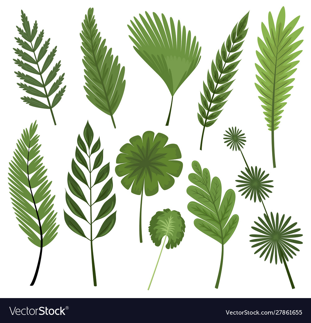 Tropical leaves collection isolated