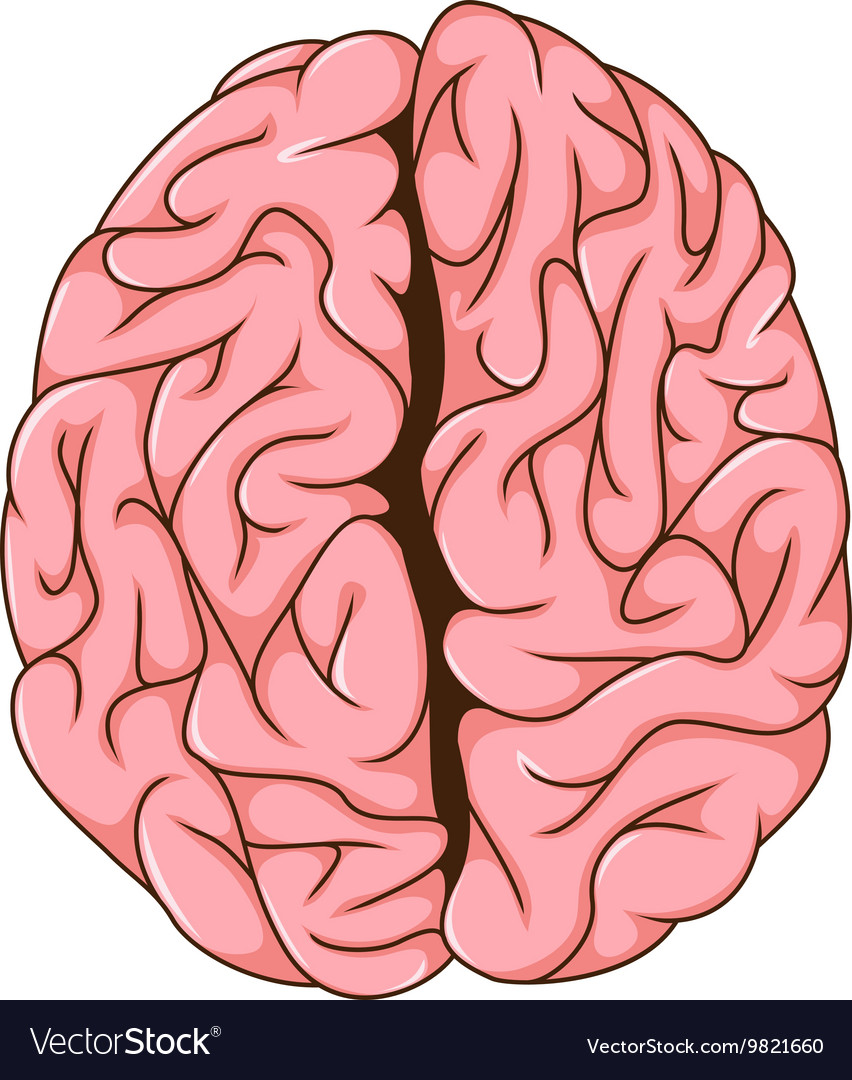 Human left and right brain cartoon Royalty Free Vector Image