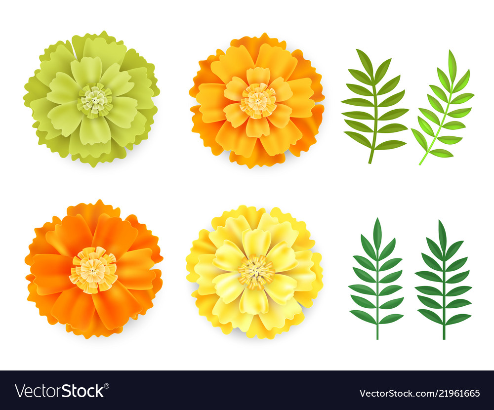 Decorative orange green yellow marigolds and vector