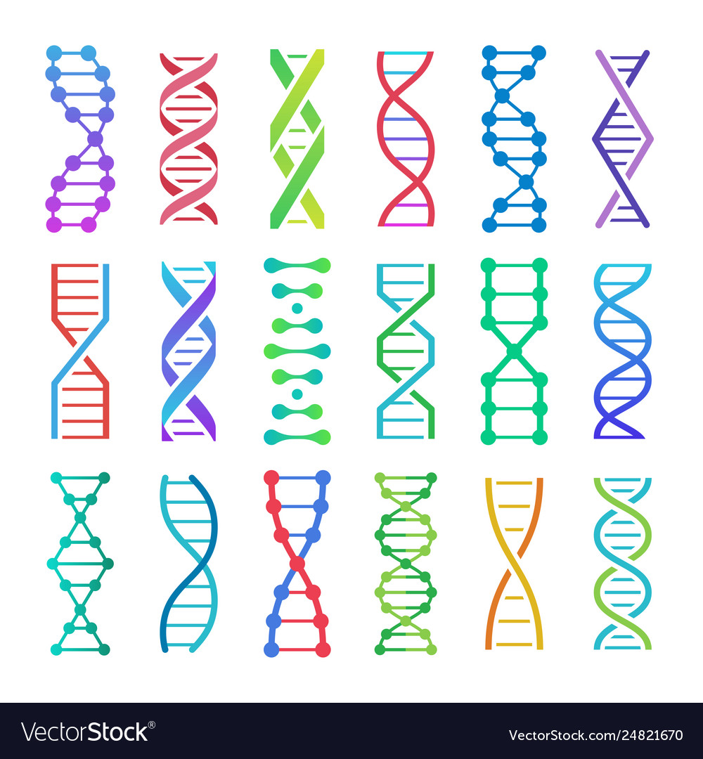 Colorful dna icon and structure spiral