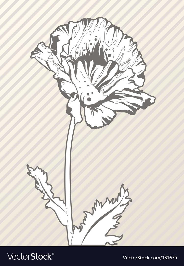 Hand Drawn Poppy Flower Royalty Free Vector Image