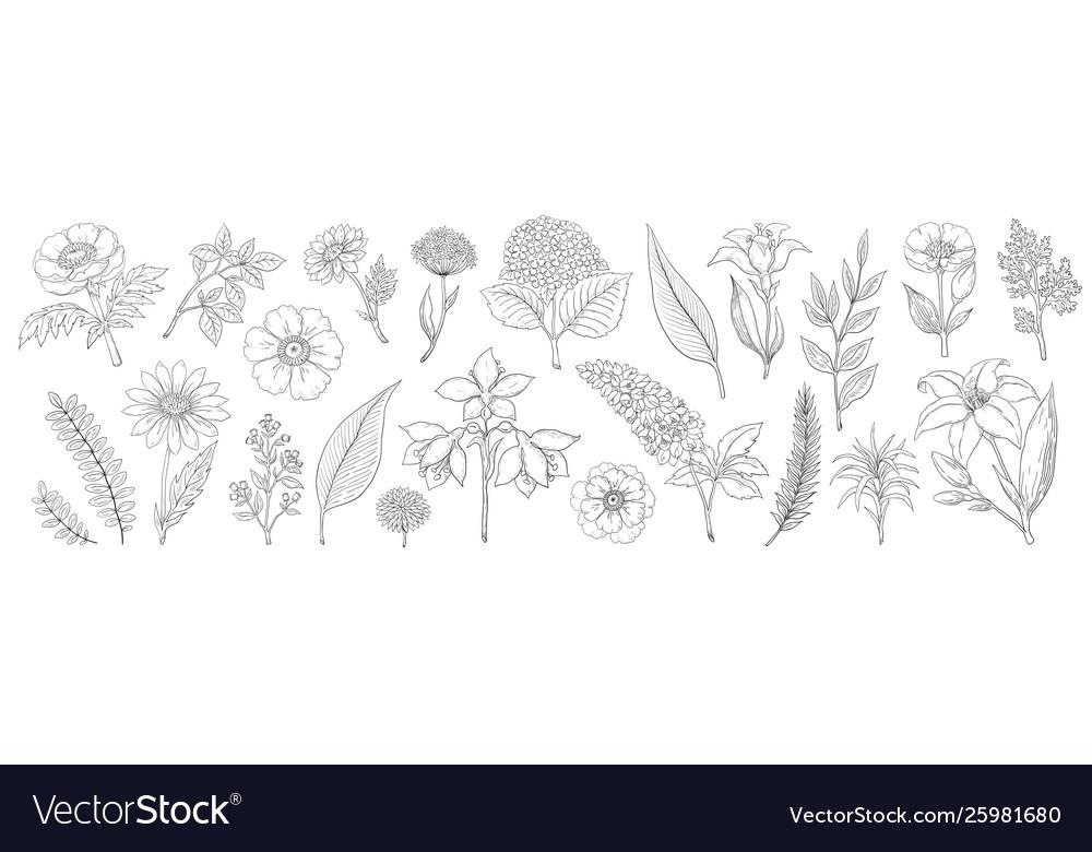Hand drawn flowers vintage floral sketch summer