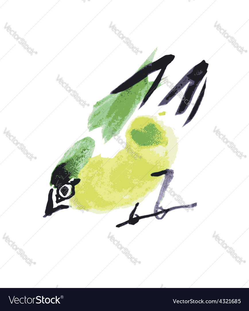 Watercolor drawing bird robin at white background