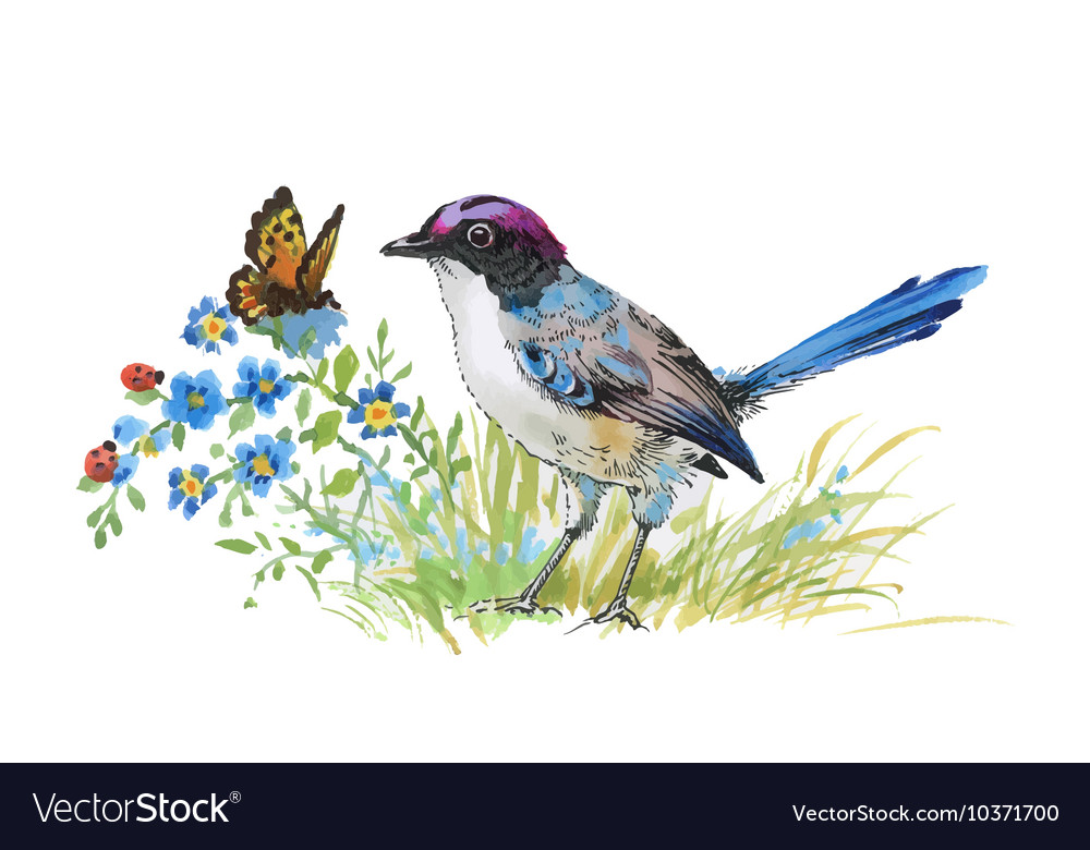 Watercolor colorful Bird and butterfly with grass