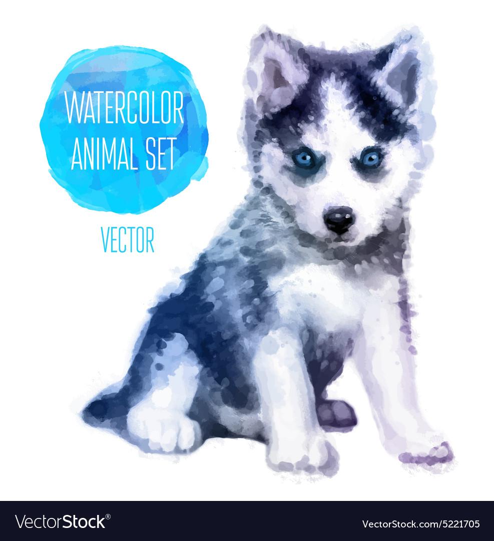 Huskies hand painted watercolor vector image