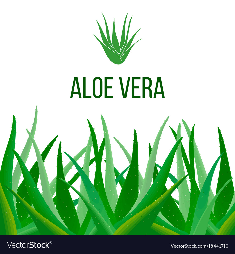 Aloe vera poster with text herbal medicine