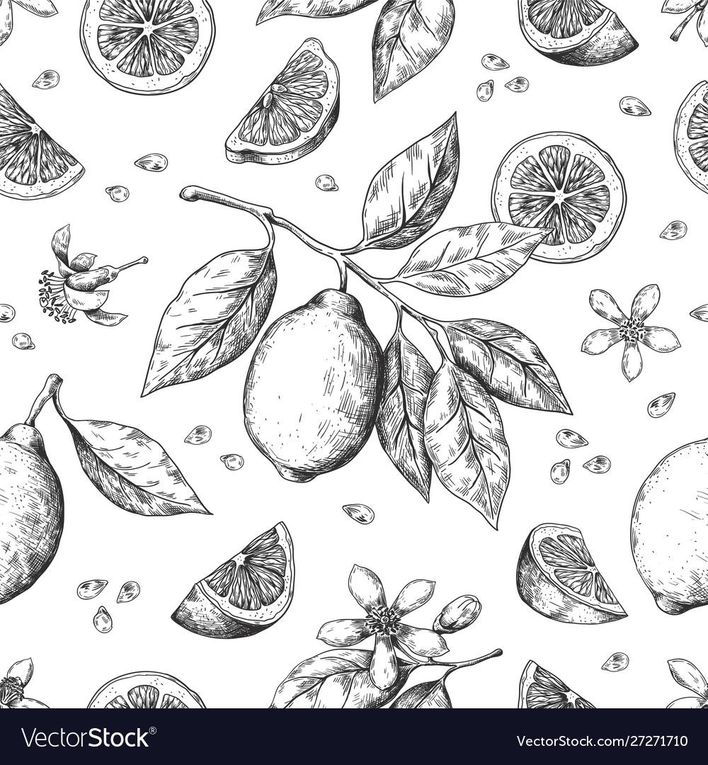 Hand drawn lemon pattern vintage seamless texture