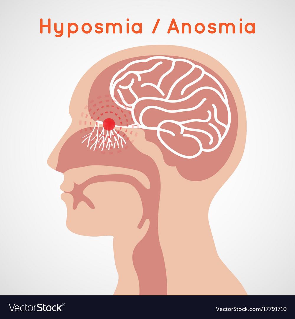 Hyposmia and anosmia logo icon design vector image