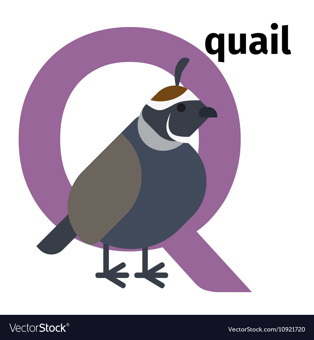 English animals zoo alphabet letter Q