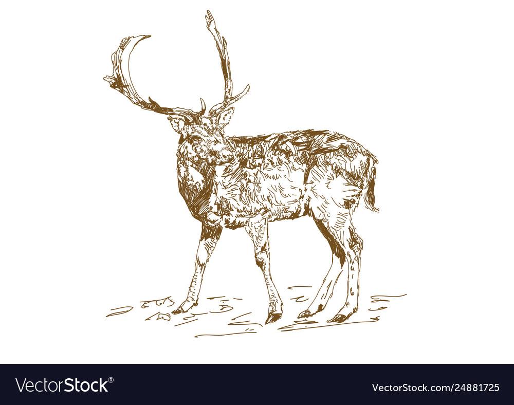 Vintage style engraved hand drawn deer