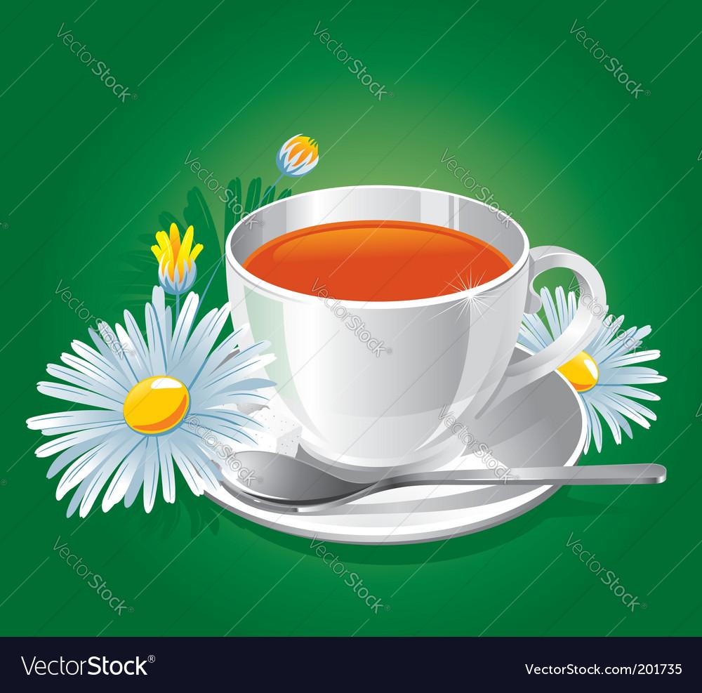 Herbal chamomile tea vector image