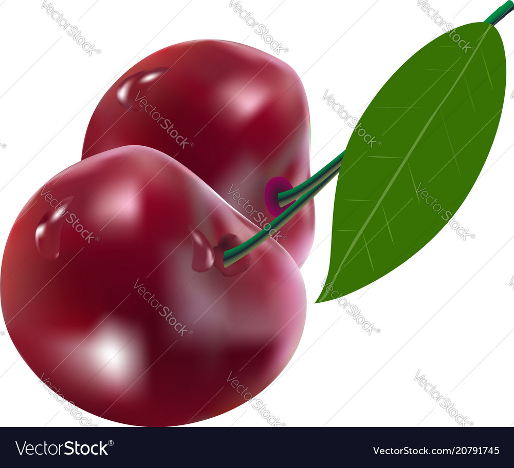 Cherry berries with leaf