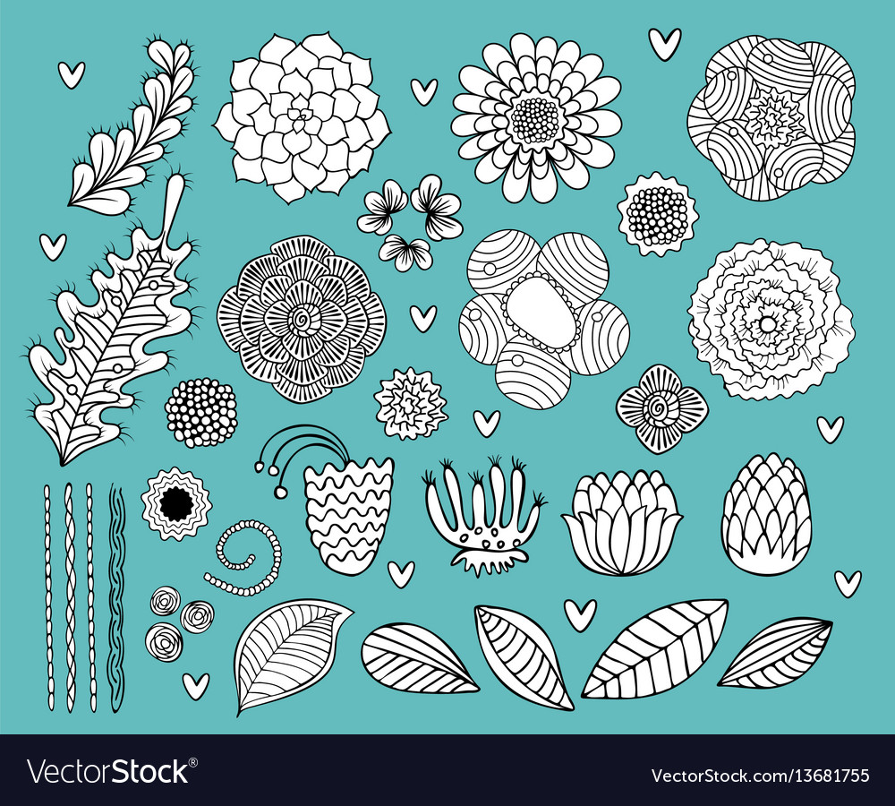 Flower hand drawn black and white set vector image