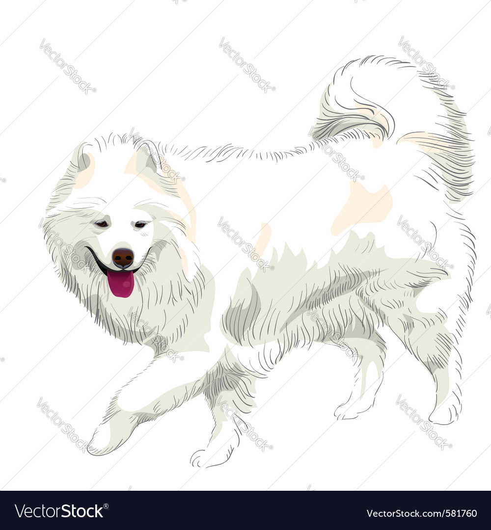 Samoyed Drawing Vector Images 21