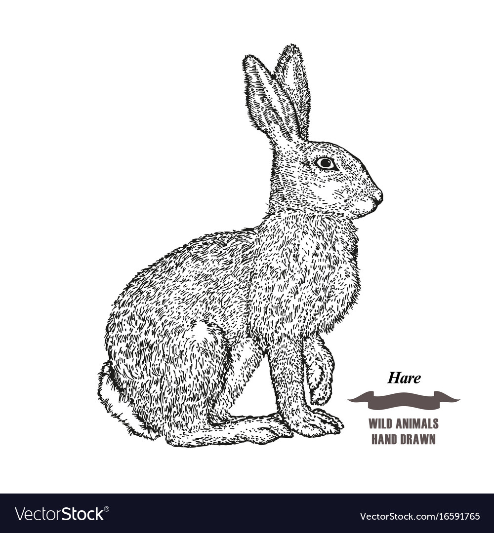 Forest animal hare or rabbit hand drawn black ink