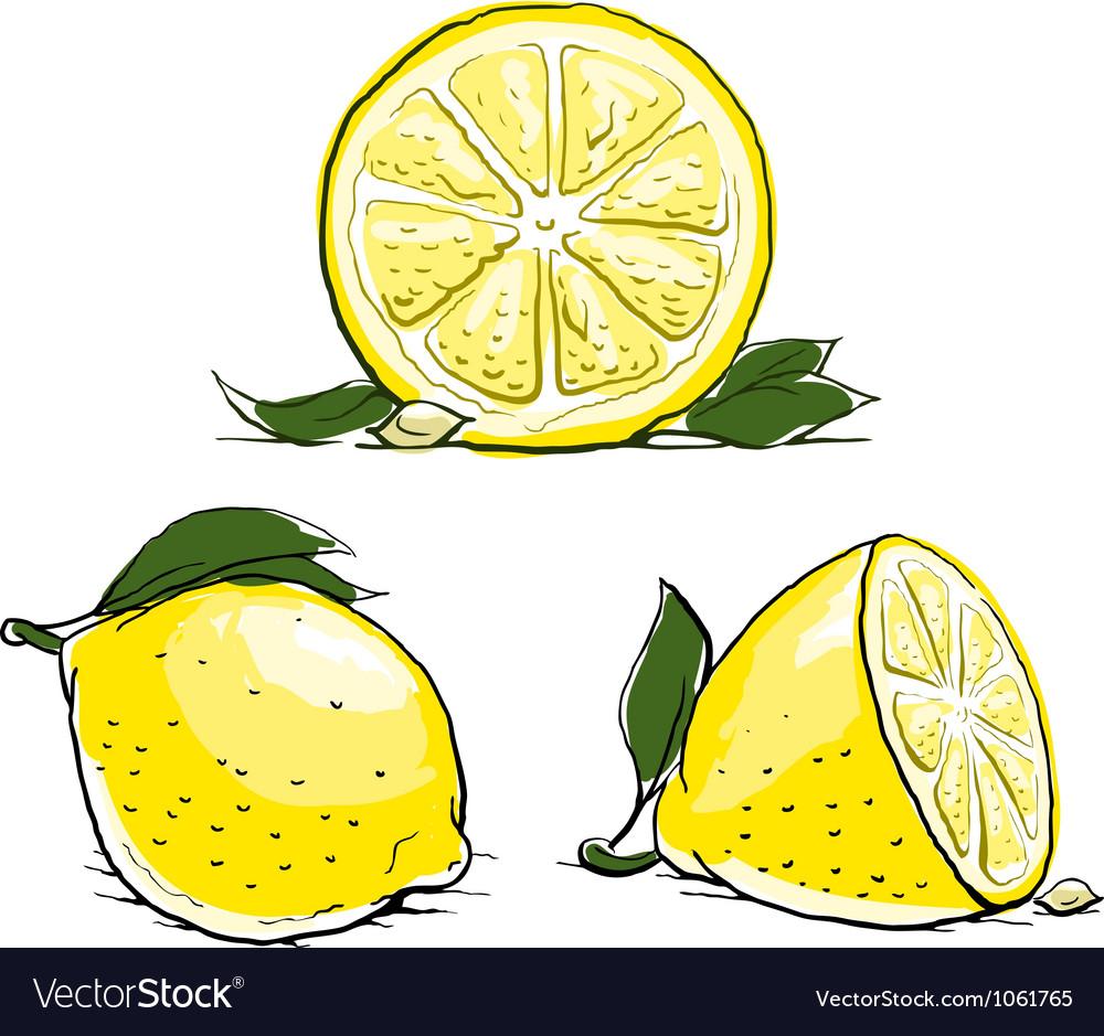 Ripe lemon with leaf vintage vector image