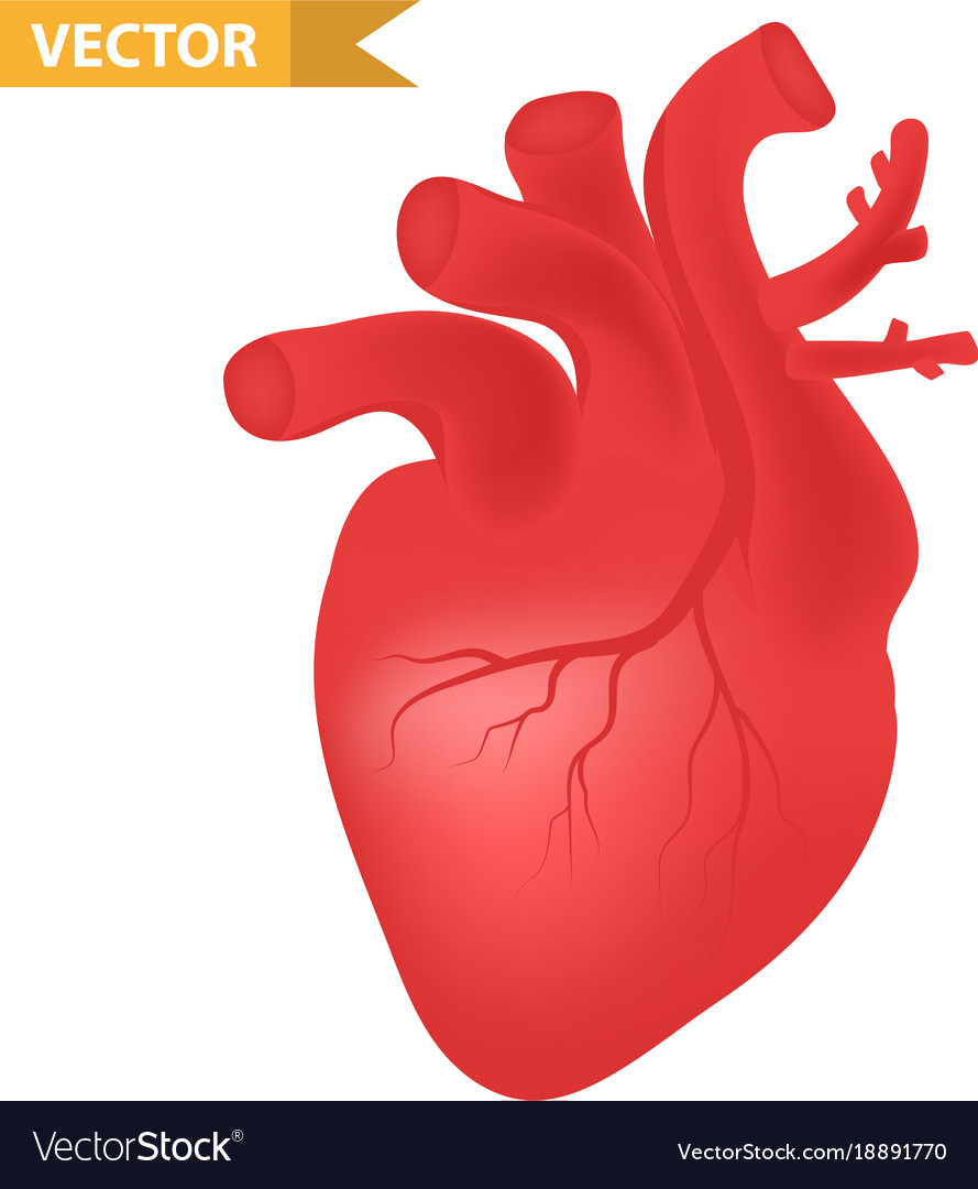 Human heart icon realistic 3d style internal