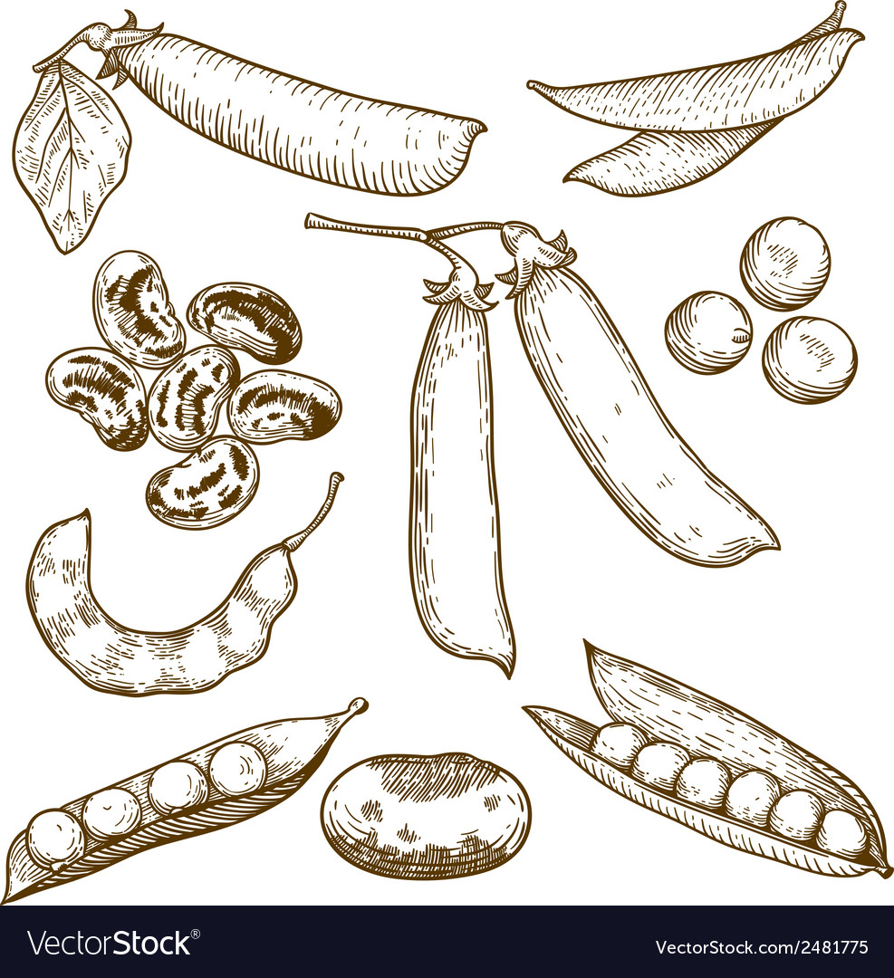 Engraving beans and peas