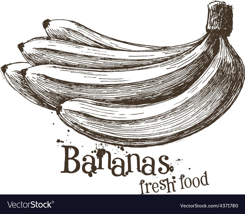 Bananas logo design template fruit or food