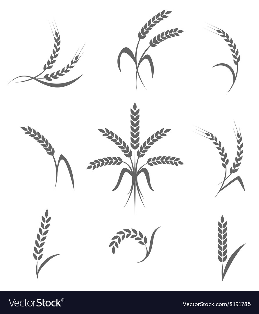 Wheat ears or rice icons set Agricultural symbols