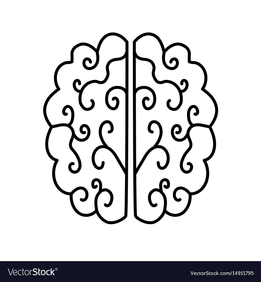 Brain illutration