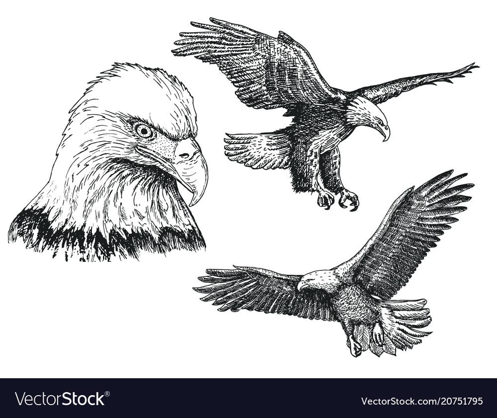 Eagle bird sketch icon set vector image