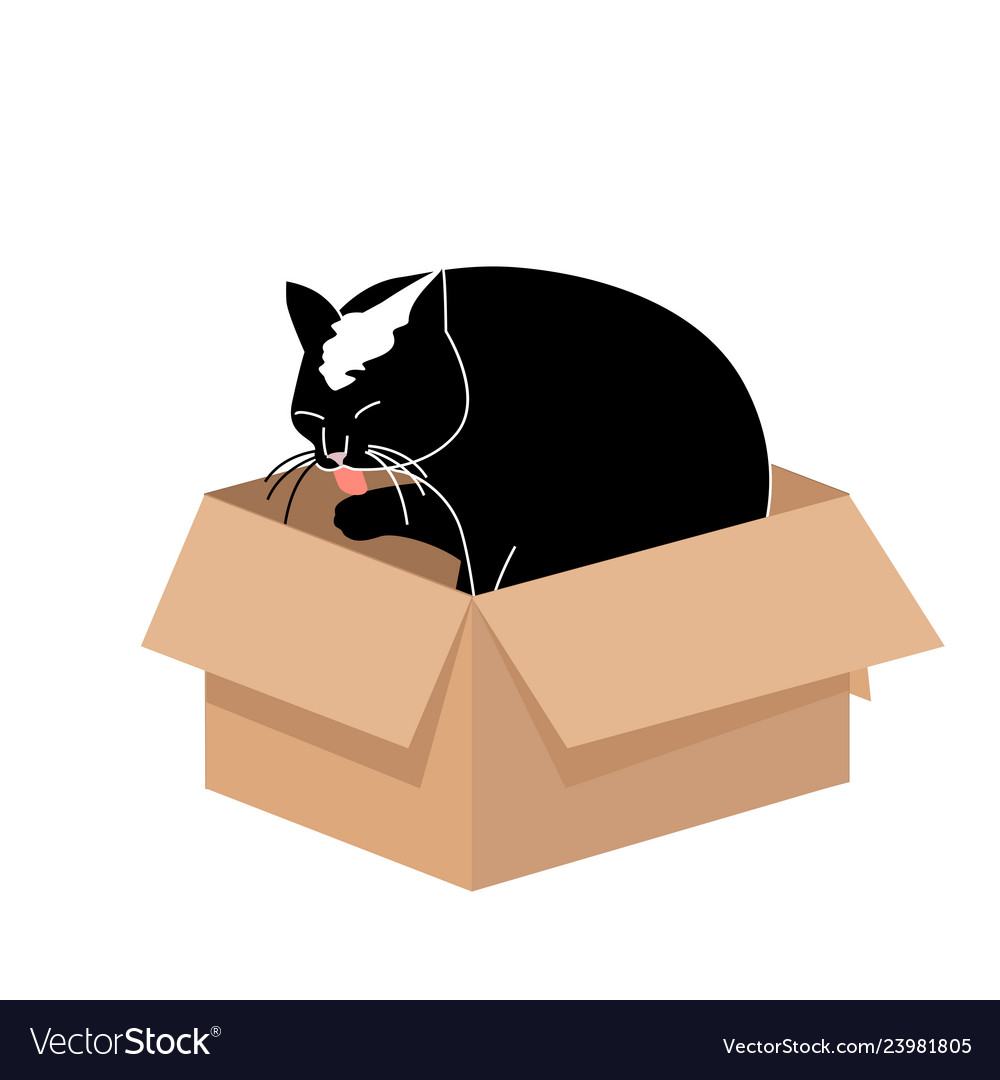 Cute big cat licking a paw in a small cardboard