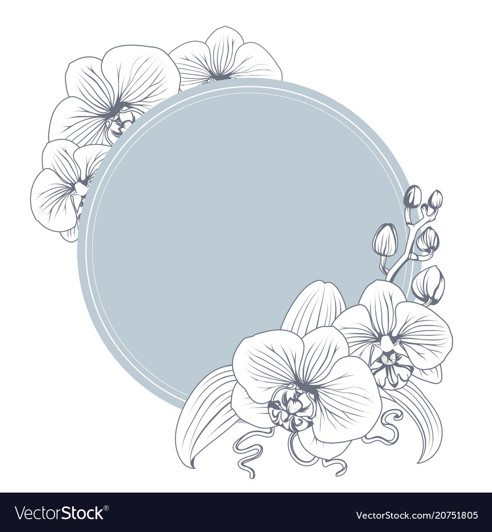 Orchid phalaenopsis flower branch bouquet wreath vector image