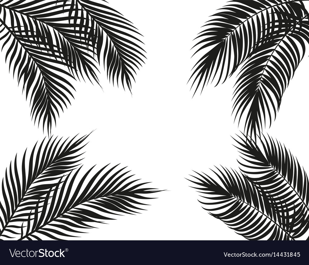 Black And White Palm Leaf