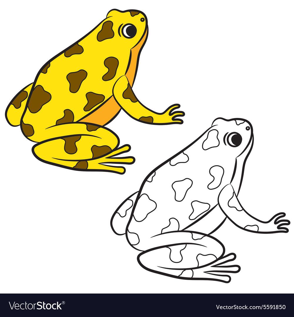 Frog coloring page Royalty Free Vector Image - VectorStock
