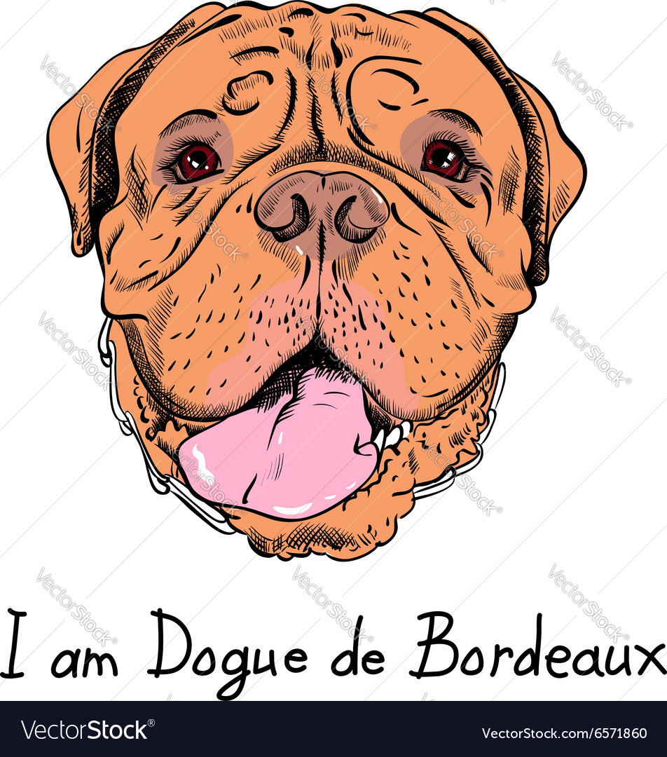 Funny cartoon hipster dog French Mastiff vector image