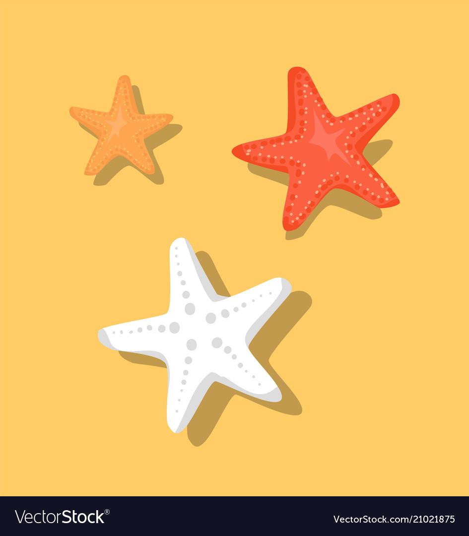 Starfish or sea stars star-shaped echinoderms set