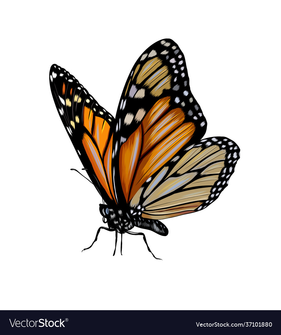 Butterfly from a splash watercolor colored