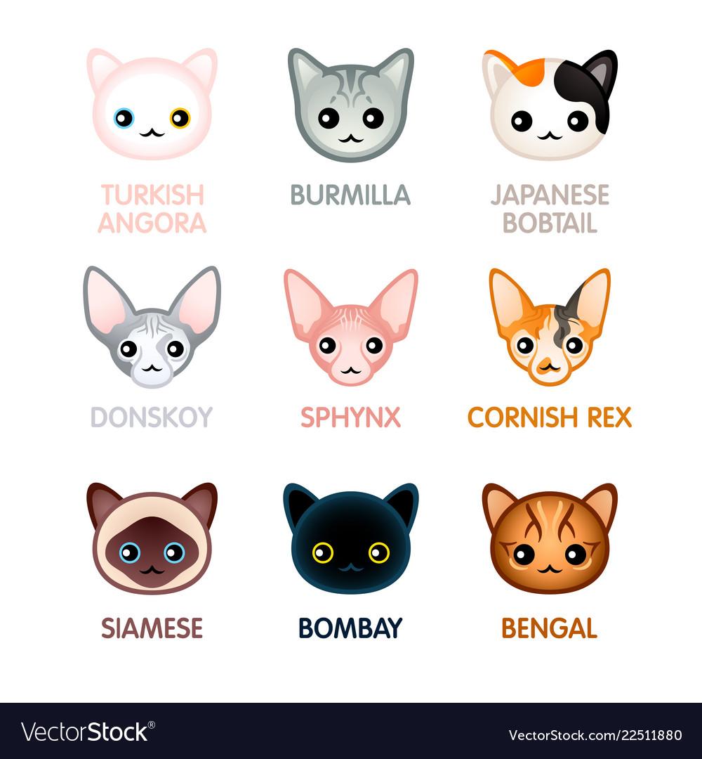 Cute cat icons set i