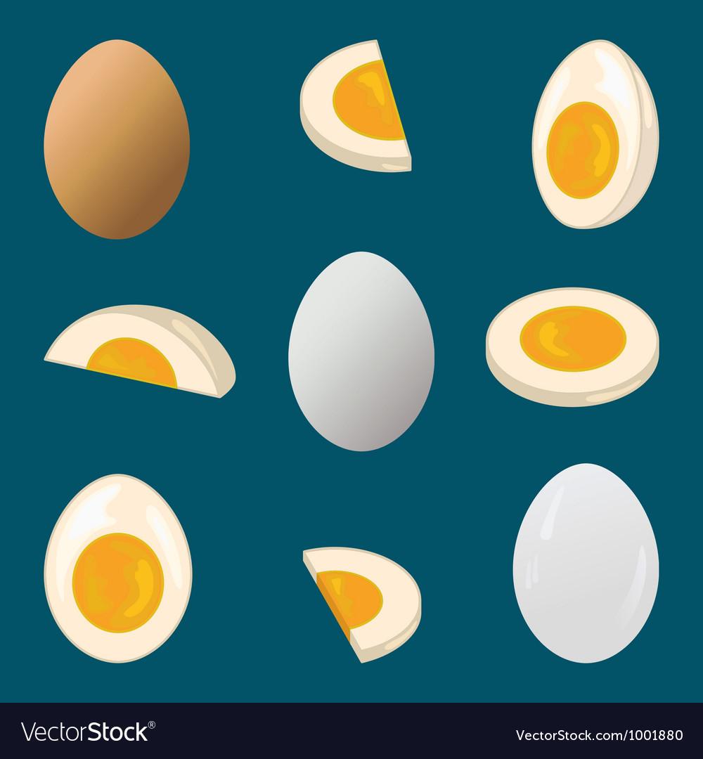 Hard boiled egg vector image