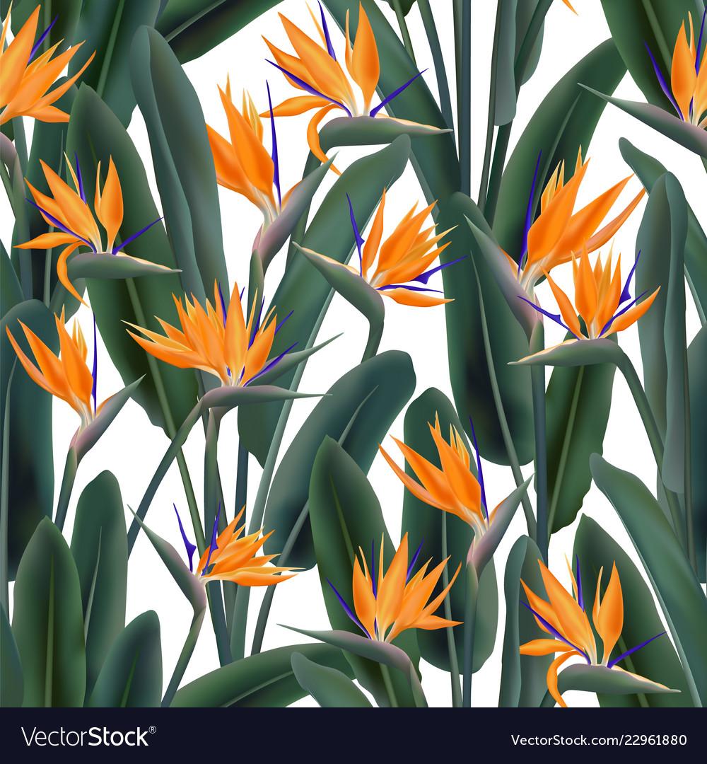 Strelitzia Reginae Or Bird Of Paradise Flower Vector Image