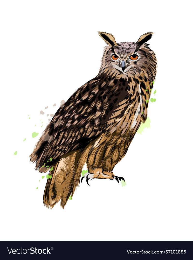 Long-eared owl eagle owl from a splash of